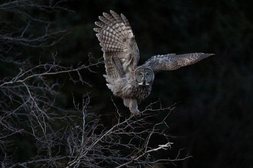 Audubon-1.jpg